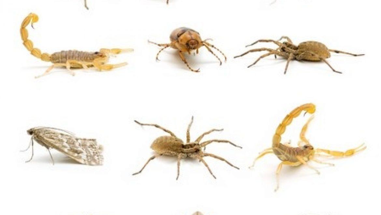 לשם מה קיימים יתושים בעולם